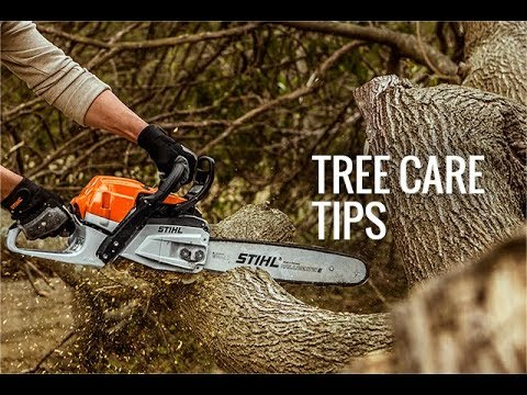 Storm Damage and Trees : Tree Care Tips