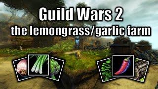Guild Wars 2 gold guide: the lemongrass/garlic farm (September 2016)