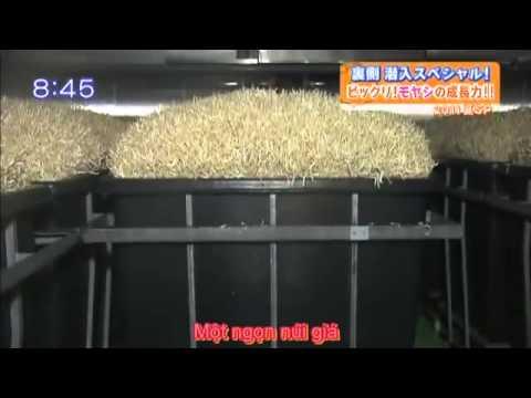 Trồng giá công nghệ Nhật Bản www.thuycanhgwall.com