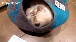 Luxury Cat Cave Bed Catgeeks Comfycat Cave Unboxing Arrival Review Video - ねこ - ラグドール - Floppycats