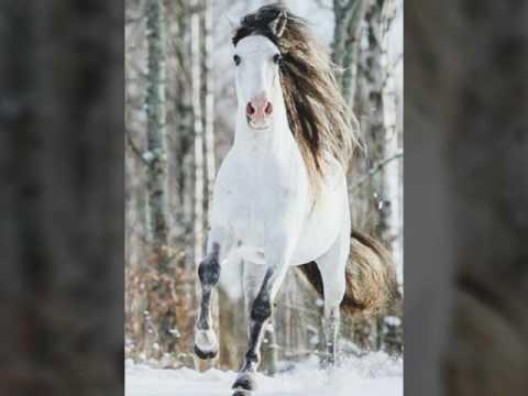Картинки лошадей: праздник новый год