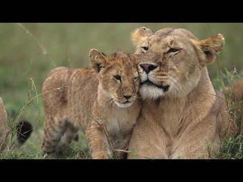 Grandes Documentales - Cazadores De África: Lazos De Sangre