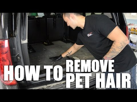 How To Remove Pet Hair From Your Car Youtube