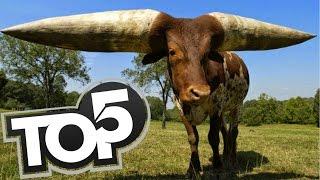 TOP 5 - Zvieratá ktoré neuveríte že existujú