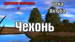 Русская рыбалка 4 рр4 rf4 река Ахтуба Чехонь