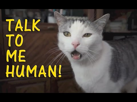 Cats Talking With Their Humans 2015 [NEW]