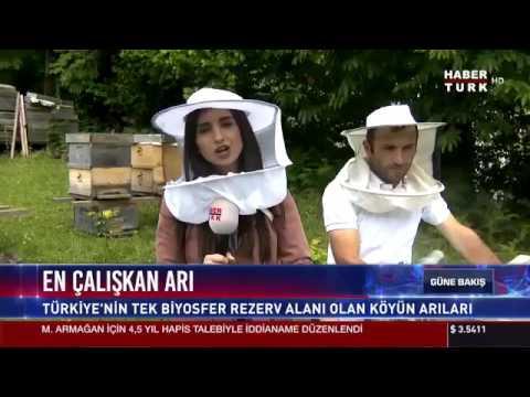 Artvin'in Camili köyünde bulunan saf Kafkas ırkı arılarının ürettiği bal