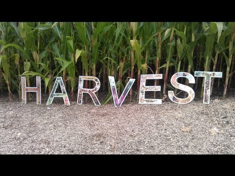 What is harvest? Facts and tips from the Eden Project