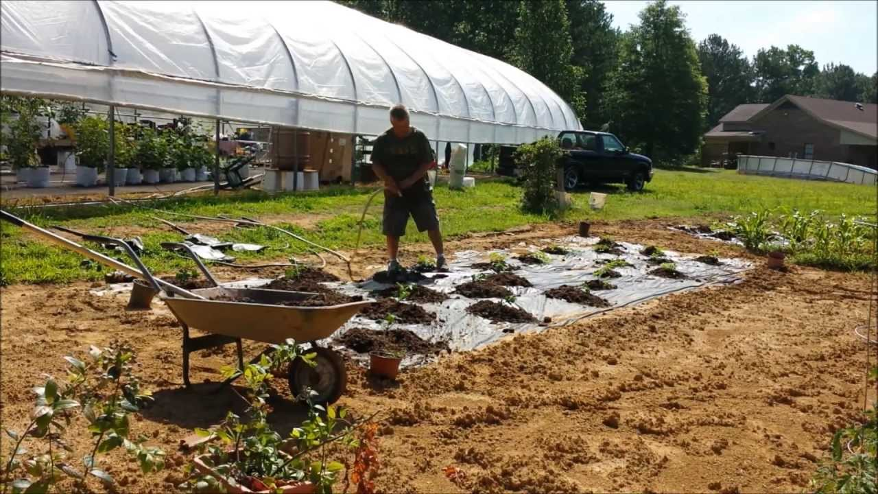 Growimg Melons In Horse Manure - YouTube