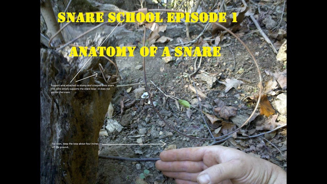 Snare School: Episode 1 Anatomy of a Snare - YouTube