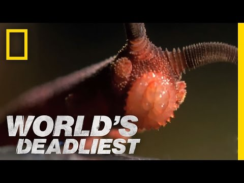 Bizarre Slime Cannon Attack | World's Deadliest