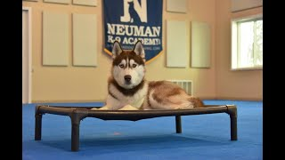 Loki (Siberian Husky) Puppy Camp Dog Training Video Demonstration