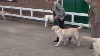 Midland Canine 2013 Dog Cc - Woolman Cadell