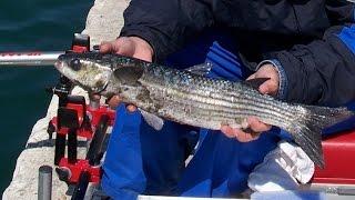 Pesca al cefalo con la canna fissa