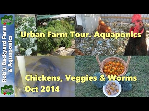 Backyard Farm tour.. Aquaponics, Chickens, Veggie Patch & Wo