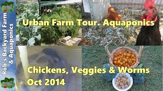Backyard Farm tour.. Aquaponics, Chickens, Veggie Patch & Worms.. Oct 2014