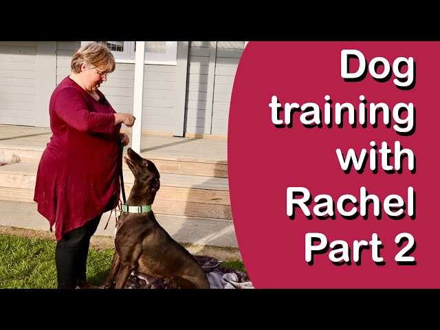 Advanced Dog Training with Greyhound Guru, Dog Behaviourist & Trainer Rachel