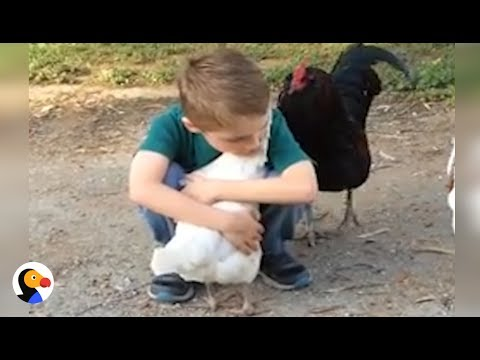 Chicken Hugs Boy After Recognizing Him with New Haircut | The Dodo