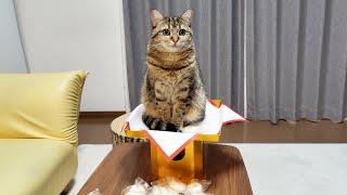 鏡開きをしたら猫神様が降臨しました!