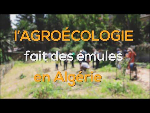 L'Agroécologie fait des émules en Algérie - Reportage