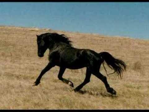 Tribute To Wild Horses Youtube