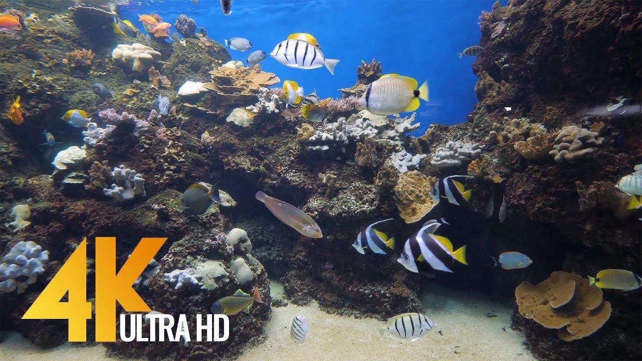4K Aquarium for Relaxation + Music - Waikiki Aquarium, Oahu, Hawaii