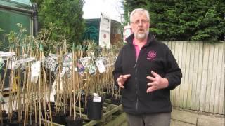 Companion Planting - Clematis & Climbing Roses | Glebe Garden Centre Leicester