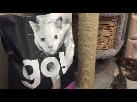 """GO! NATURAL Holistic Корм GO! NATURAL Holistic беззерновой для котят и кошек """"4 вида мяса"""