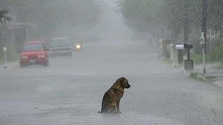 Hund wartet 10 Jahre auf toten Besitzer