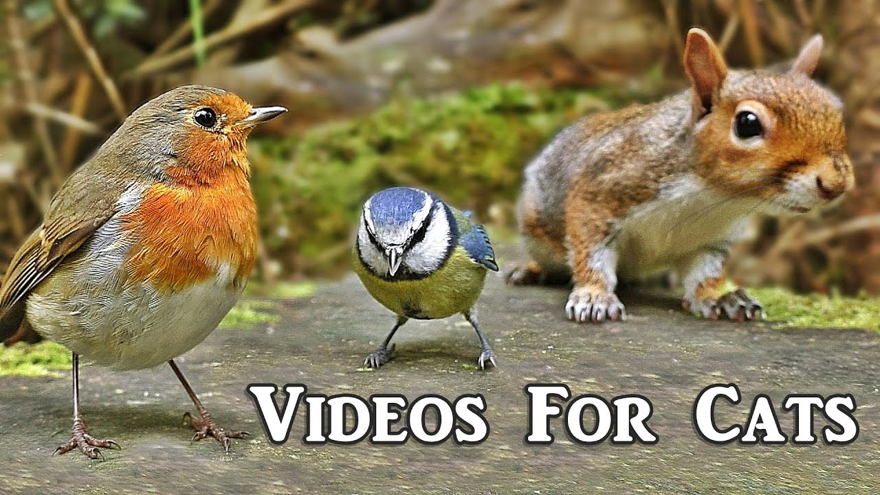 Videos For Cats To Watch Forest Birds Extravaganza Youtube