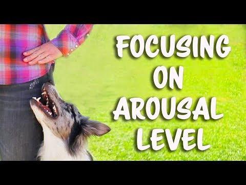 Focusing on arousal level for flashy heelwork!  -  Dog Training by Kikopup