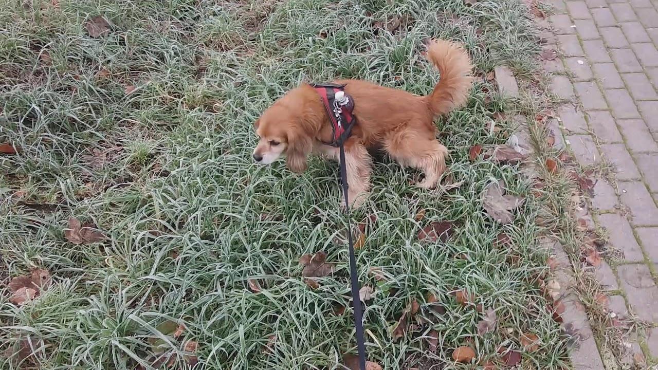 Hund zu verschenken(2) - YouTube
