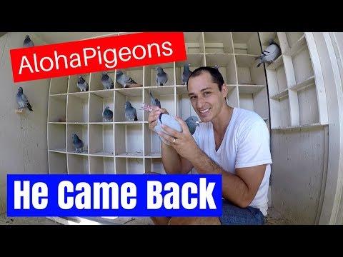 Missing Pigeon