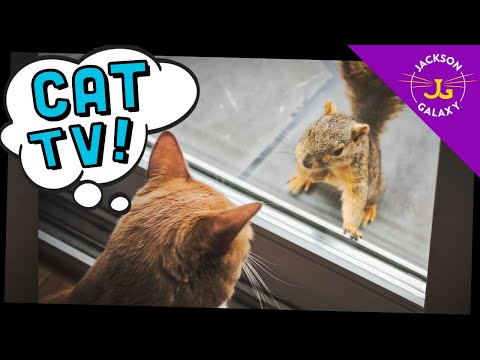 Cute Cat Compilation of the Week...CAT TV!