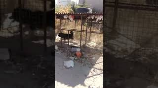 Komik video larr kayseri esgişehir baglari selcuklu