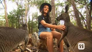 Celebrity Pet - Georgia Germein's Kangaroos