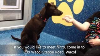 Nitro - Adopted
