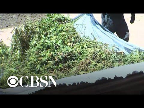 1.19-billion-worth-of-marijuana-seized-in-massive-drug-bust-in-California