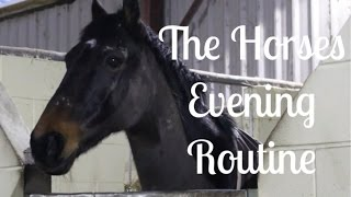 The Horses Evening Routine