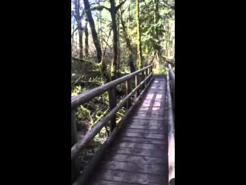 Amazon Creek Intro Walk