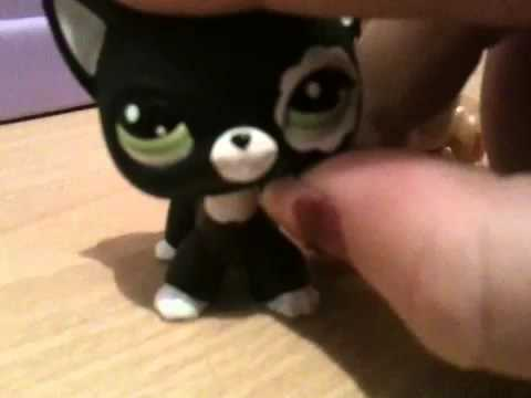 LPS shorthaired cat for trade:) - YouTube