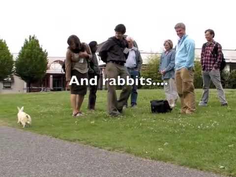 Rabbits Gone Wild on Campus