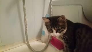 Кот пьёт воду из-под крана