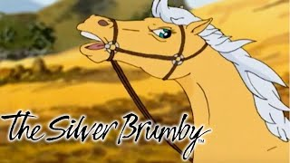 The Silver Brumby | 🐎Golden Escapes  🐎 | Videos For Kids | Cartoons For Children