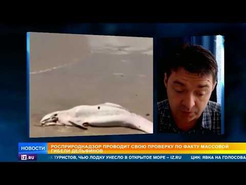 В Черном море массово умирают дельфины
