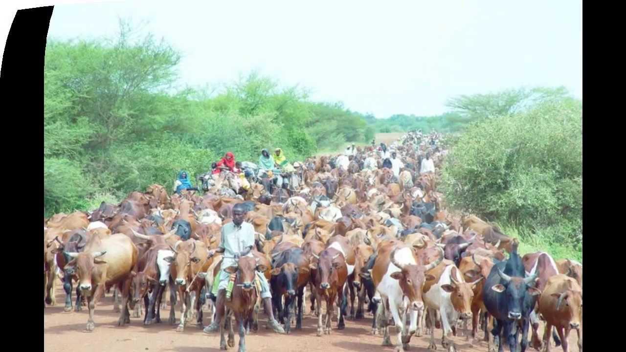 صورك التي تبحث عنها في دارفور ستجدها هنا Maxresdefault