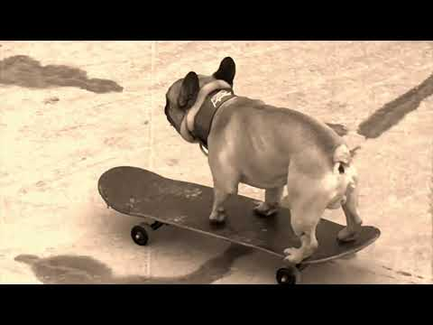 Twisted Teddy and Eroc the Skateboarding French Bulldog.