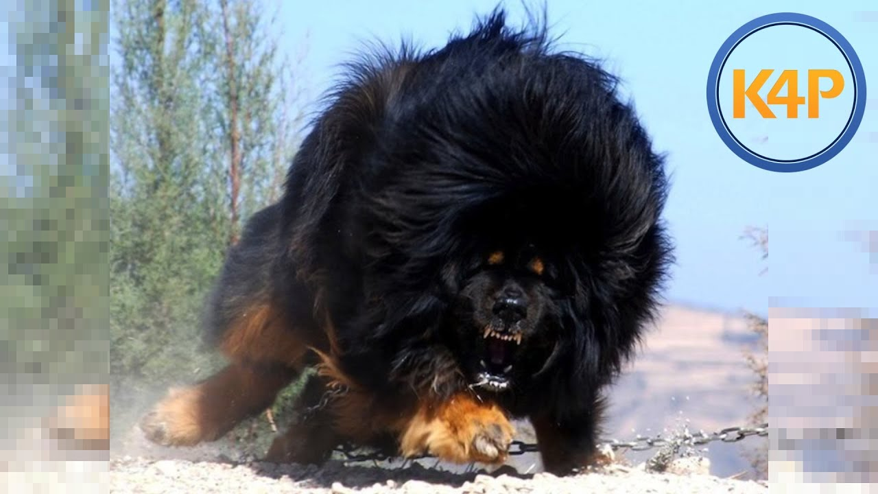 Top Ten Best Dog Breeds In The World