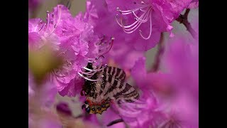 Про бабочку