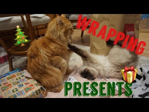 🎄 Wrapping Presents with my Ragdoll & Maine Coon 🎁